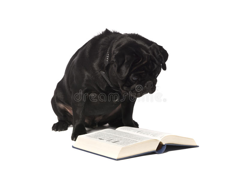 Cão que lê um livro imagens de stock