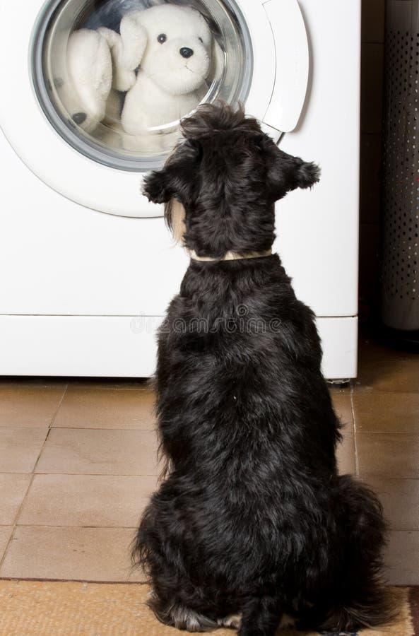 Cão que olha a máquina de lavar imagens de stock