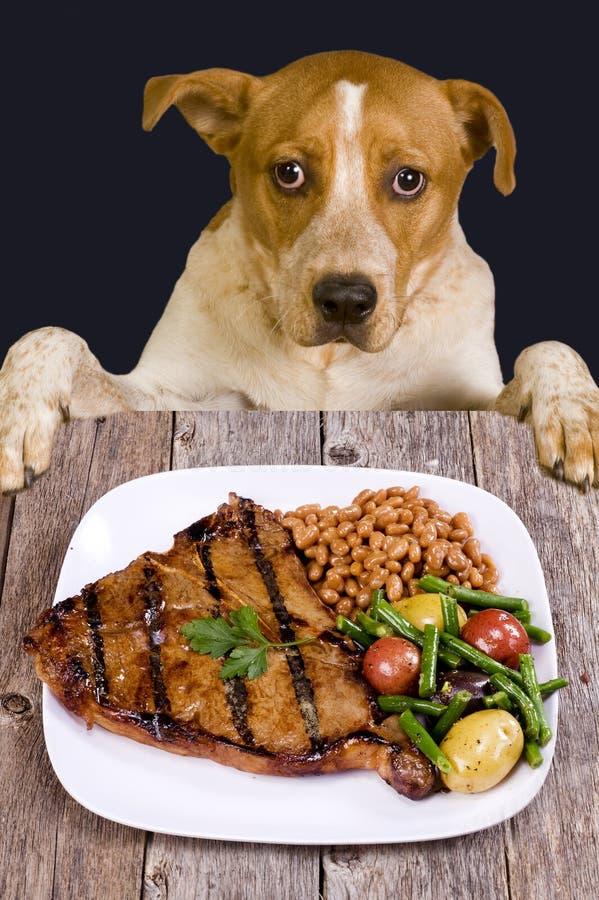Cão que olha o jantar do bife foto de stock royalty free