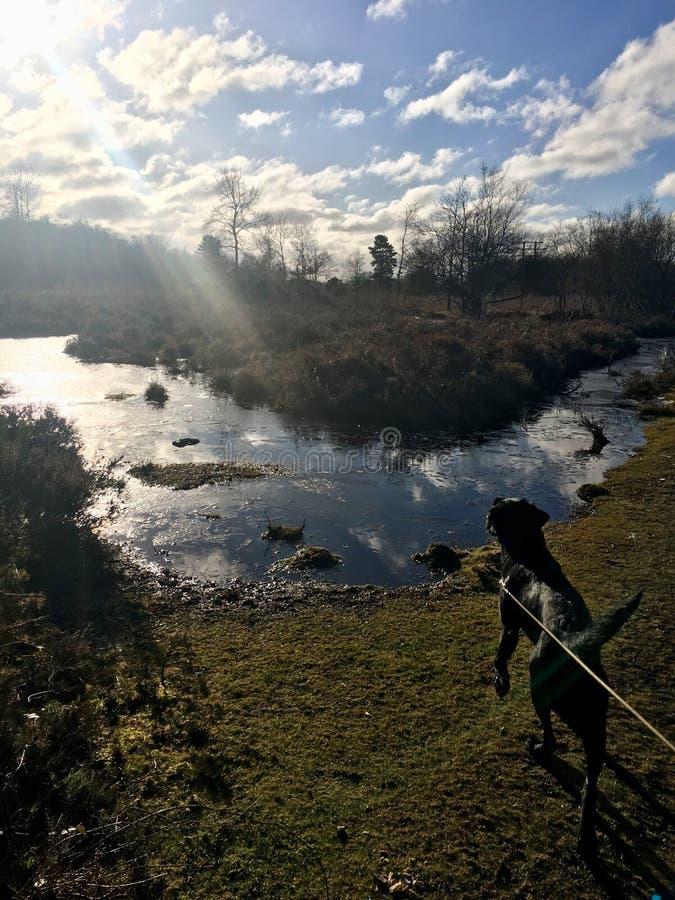 Cão que olha o lago gelado fotografia de stock