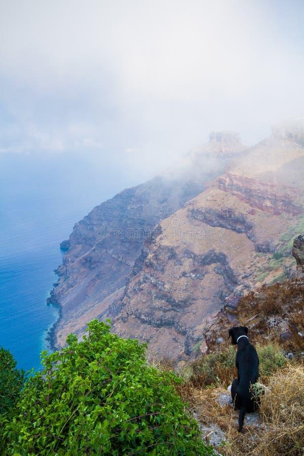 Cão que olha os penhascos de Santorini imagem de stock royalty free