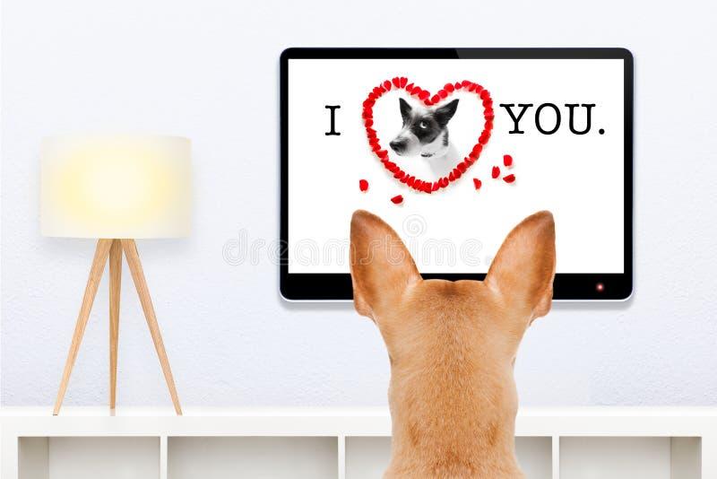 Cão que olha a tevê imagens de stock