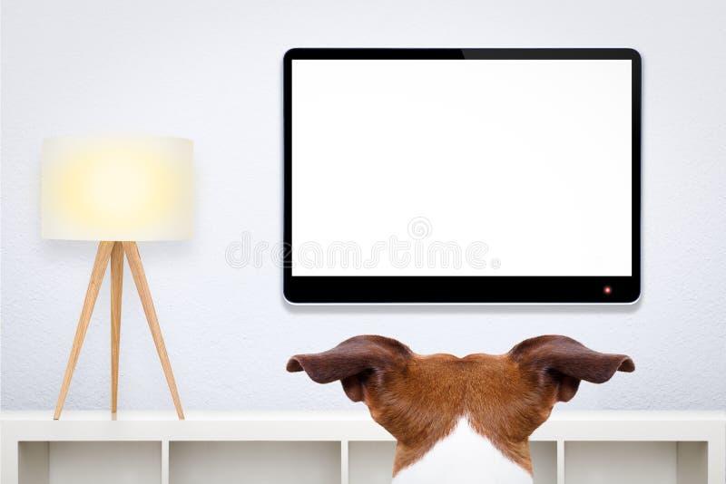 Cão que olha a tevê imagens de stock royalty free