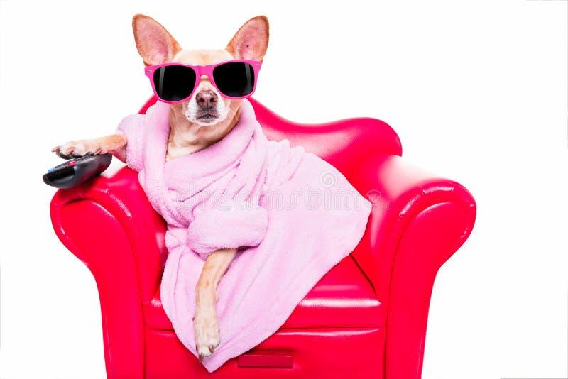 Cão que olha a tevê no sofá imagens de stock
