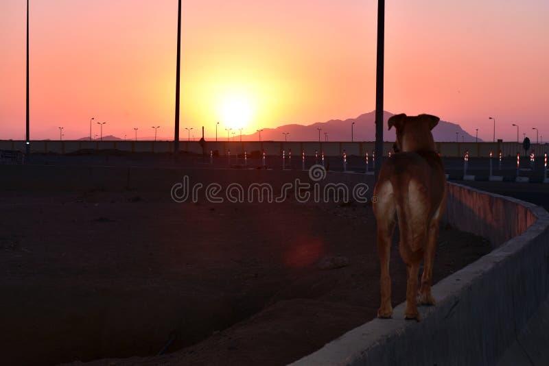 Cão que olha um nascer do sol bonito imagens de stock