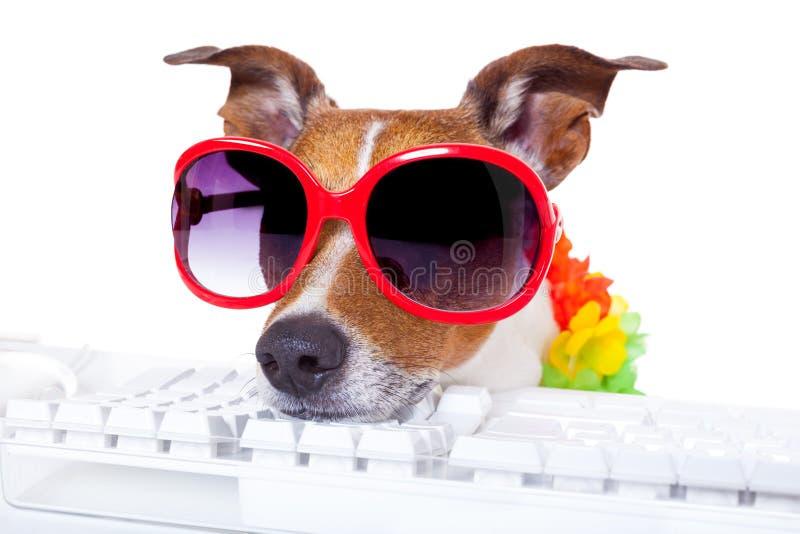 Cão que registra em linha fotos de stock
