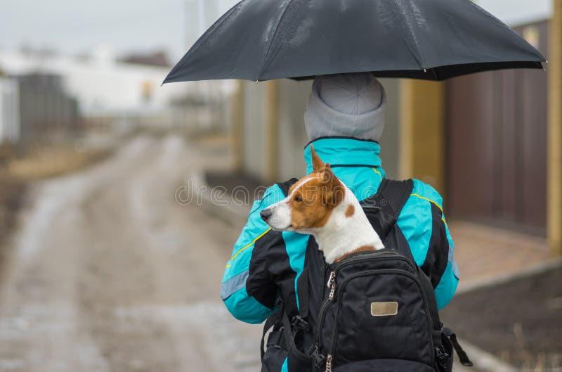 Cão que tem a caminhada agradável imagem de stock royalty free