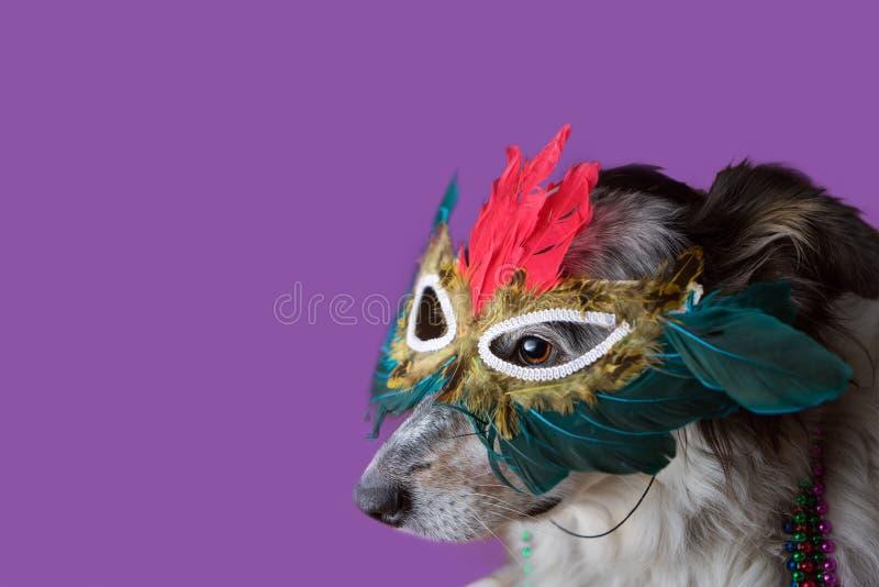 Cão que veste a máscara de Mardi Gras imagens de stock royalty free
