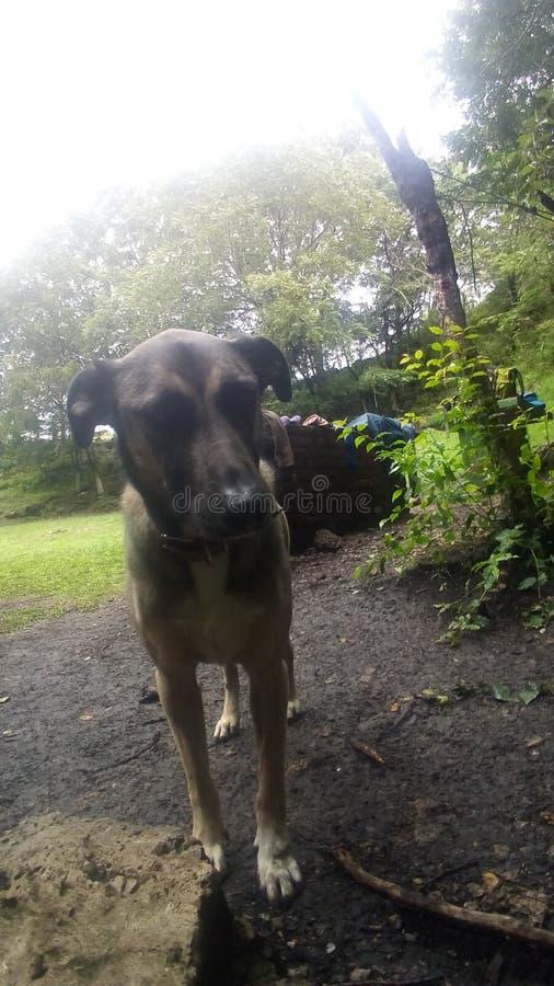 Cão que viaja em Roadtrip fotos de stock royalty free