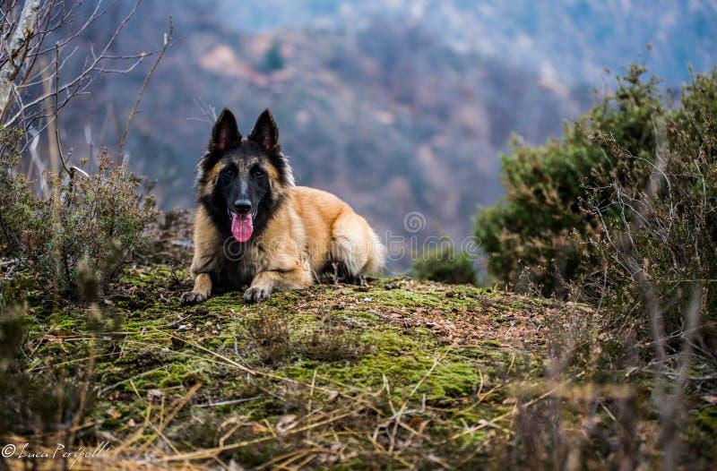 Cão relaxado fotos de stock