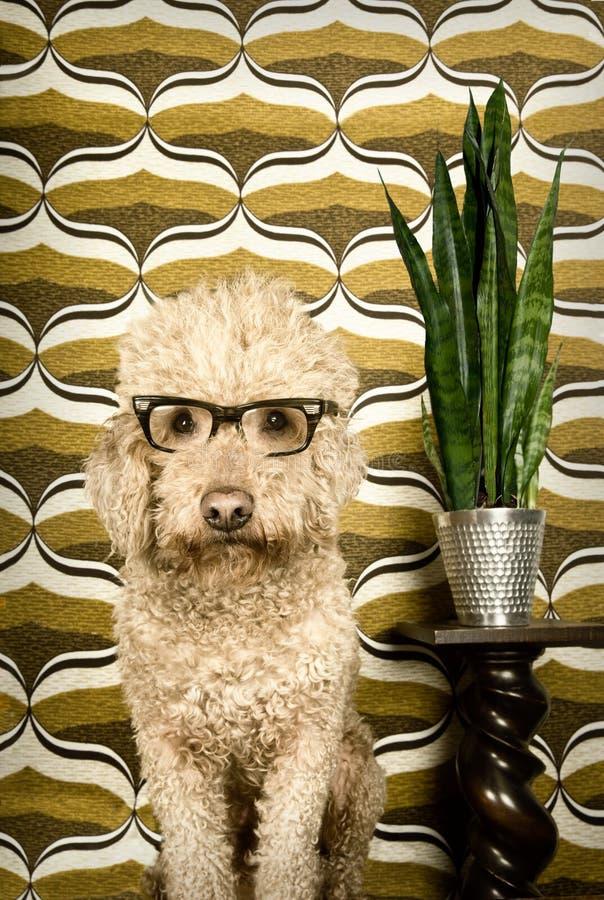 Cão retro foto de stock