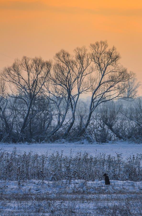 Cão só na paisagem da manhã do inverno fotografia de stock royalty free