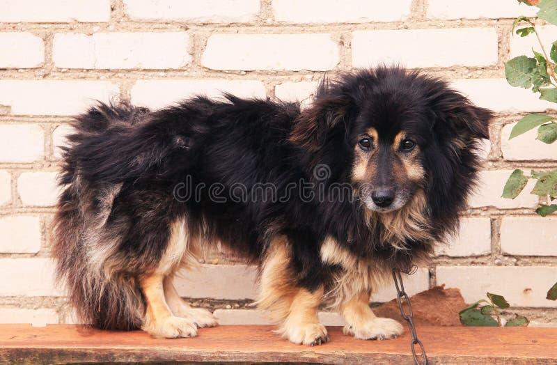 Cão selvagem fotografia de stock