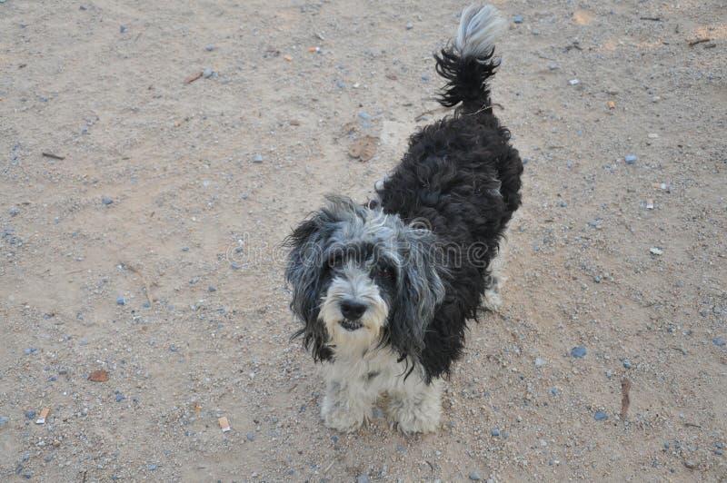 Cão sem a casa foto de stock royalty free