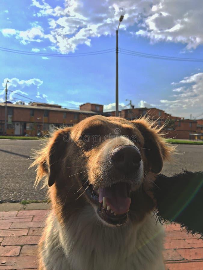 cão sem um olho fotografia de stock