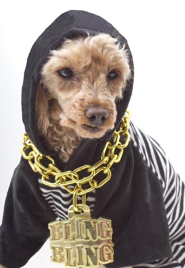 Cão sinistro fotografia de stock royalty free