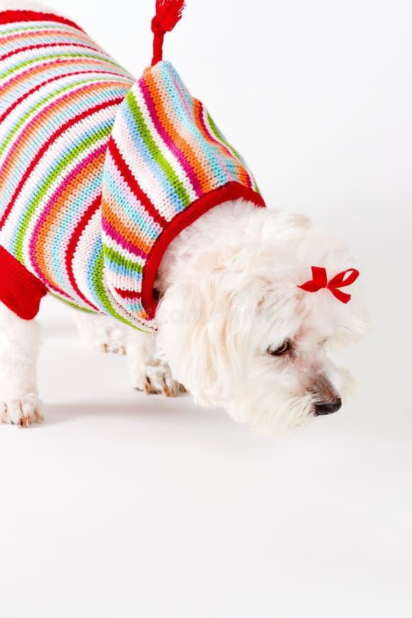 Cão Sniffing foto de stock