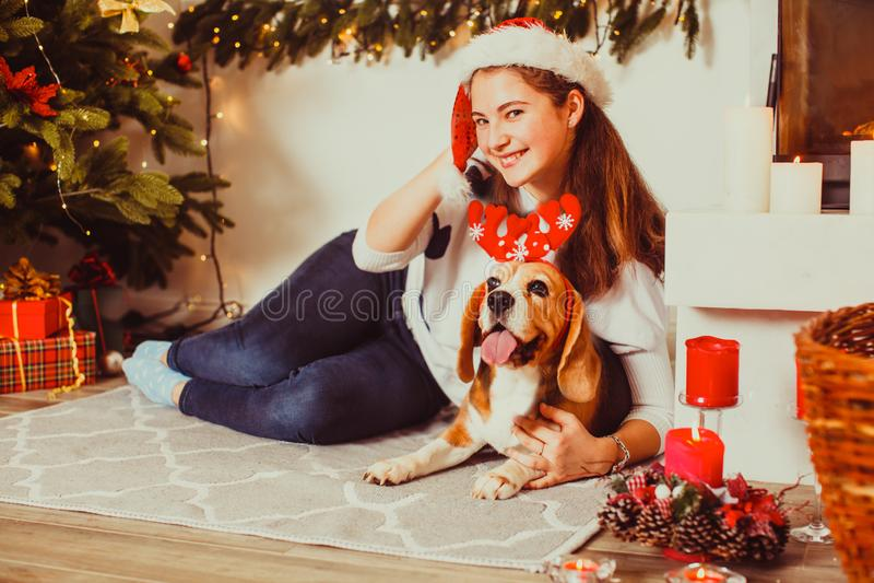 Cão sob a árvore de Natal em casa, imagens de stock