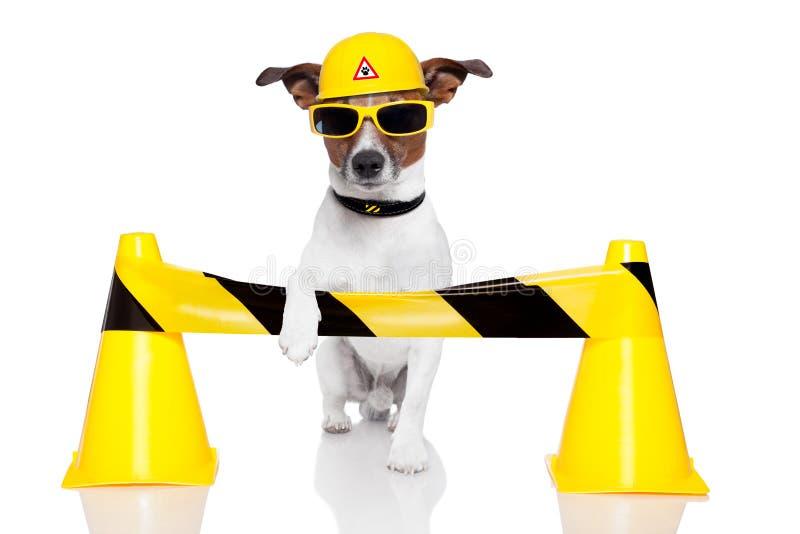 Cão sob a construção