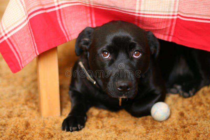 Cão sob uma tabela fotografia de stock