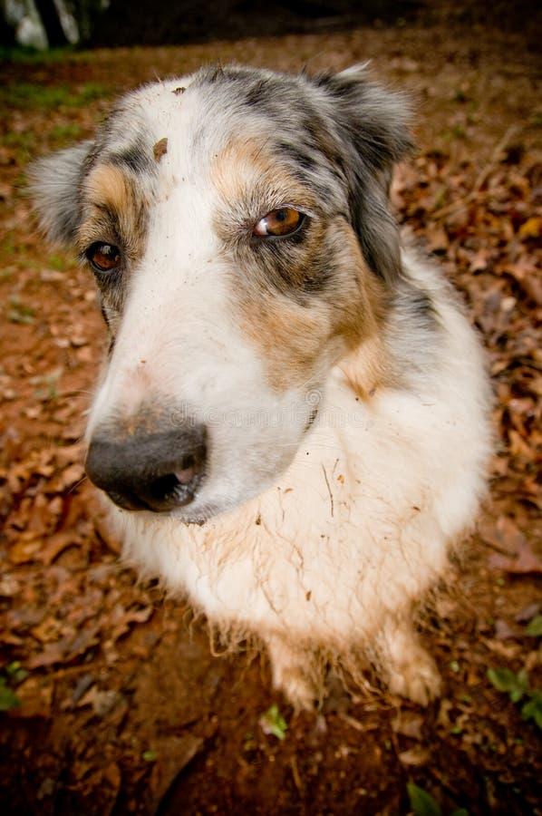 Cão sujo fotografia de stock