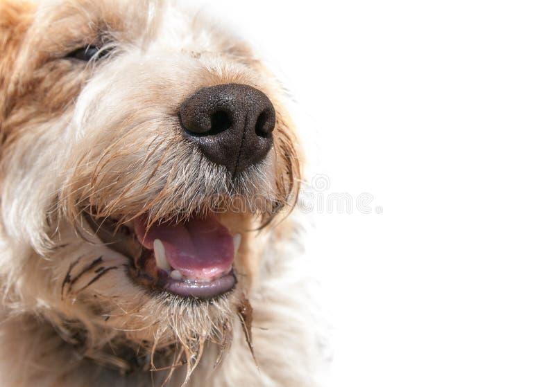 Cão sujo do nariz imagem de stock
