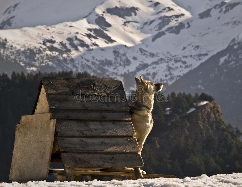 Cão Sunbath imagem de stock