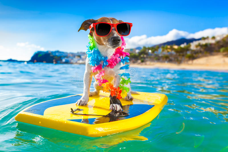 Cão surfando fotos de stock royalty free