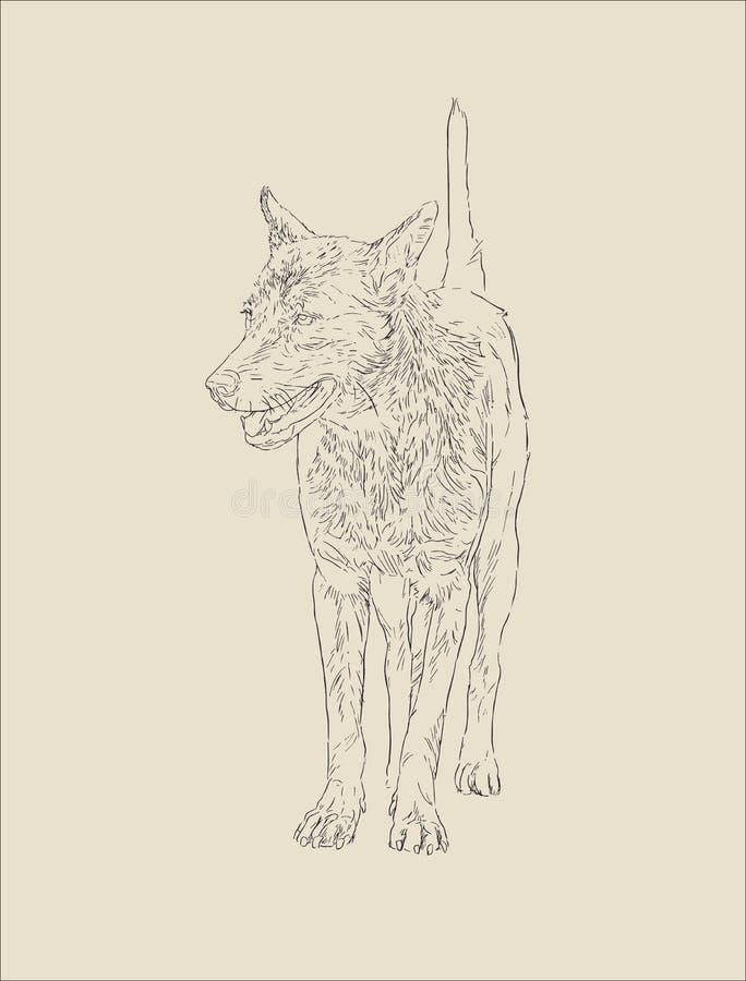 Cão tailandês, cão bonito do retrato, vetor do esboço ilustração royalty free