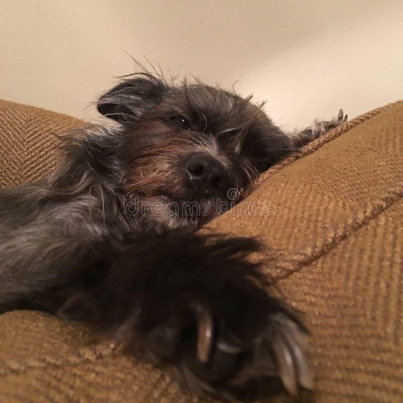 Cão Tired foto de stock