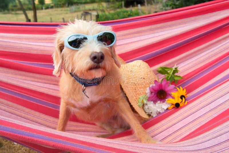 Cão transversal pequeno engraçado da raça na rede foto de stock royalty free