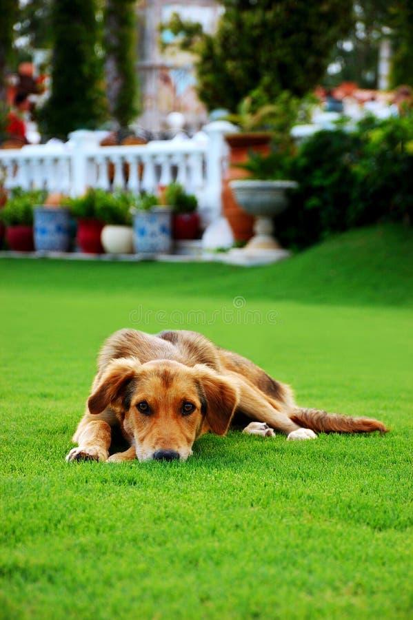 Download Cão triste na grama foto de stock. Imagem de terra, canine - 16858862