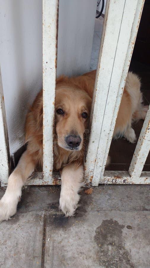 Cão triste na prisão imagens de stock royalty free
