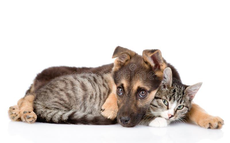 Cão triste que abraça o gato de gato malhado Isolado no fundo branco fotos de stock royalty free