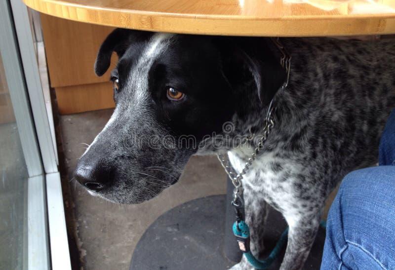 Cão triste sob a tabela fotografia de stock