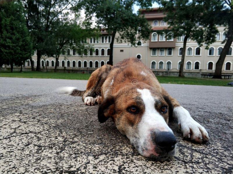 Cão triste sozinho imagem de stock royalty free