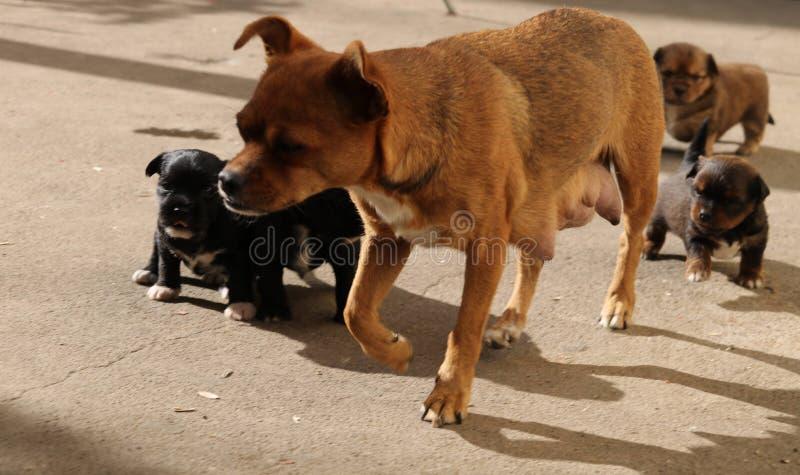 Cão; um sobrenome imagens de stock royalty free