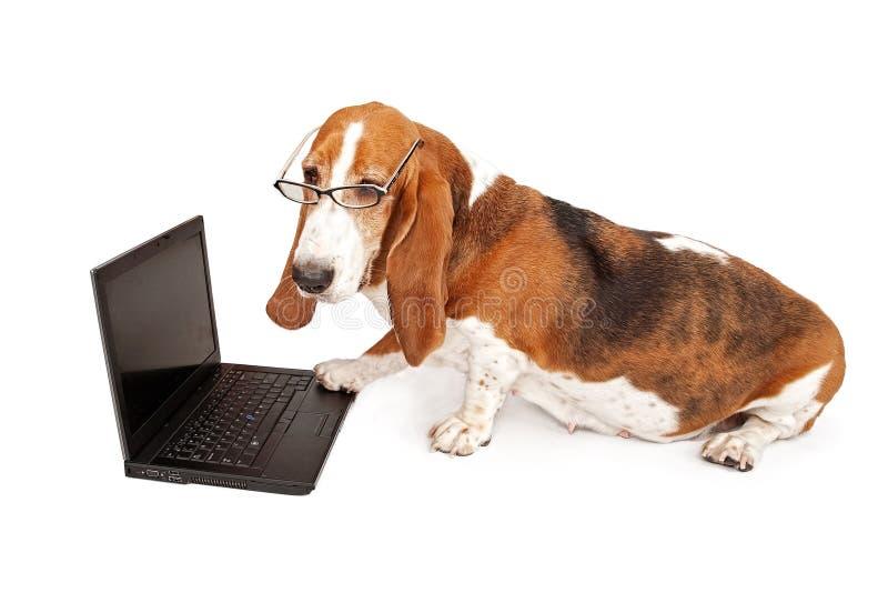Cão usando um computador portátil isolado no branco imagens de stock