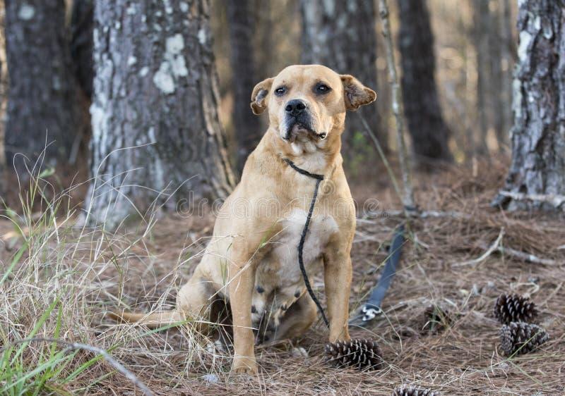 Cão velho da vira-lata da mistura do terrier na trela fora do assento para baixo fotografia de stock royalty free