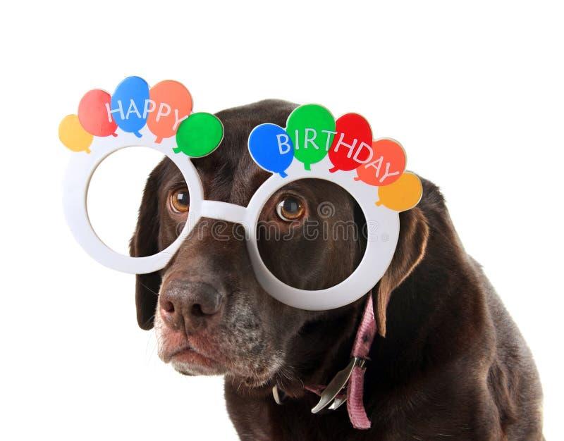 Cão velho do aniversário fotografia de stock
