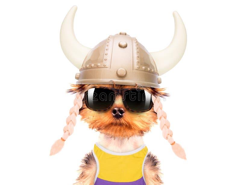 Cão vestido acima como de um viquingue imagens de stock royalty free
