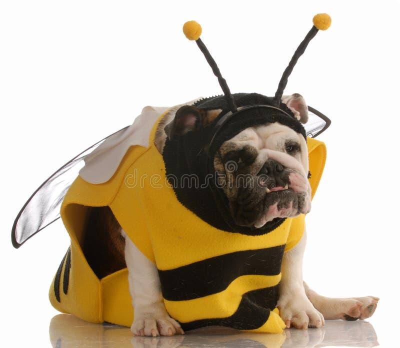 Cão vestido acima como de uma abelha imagem de stock