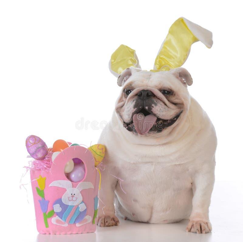 cão vestido acima para easter imagem de stock