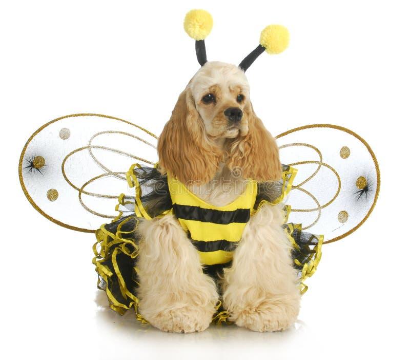 Cão vestido como uma abelha fotos de stock royalty free