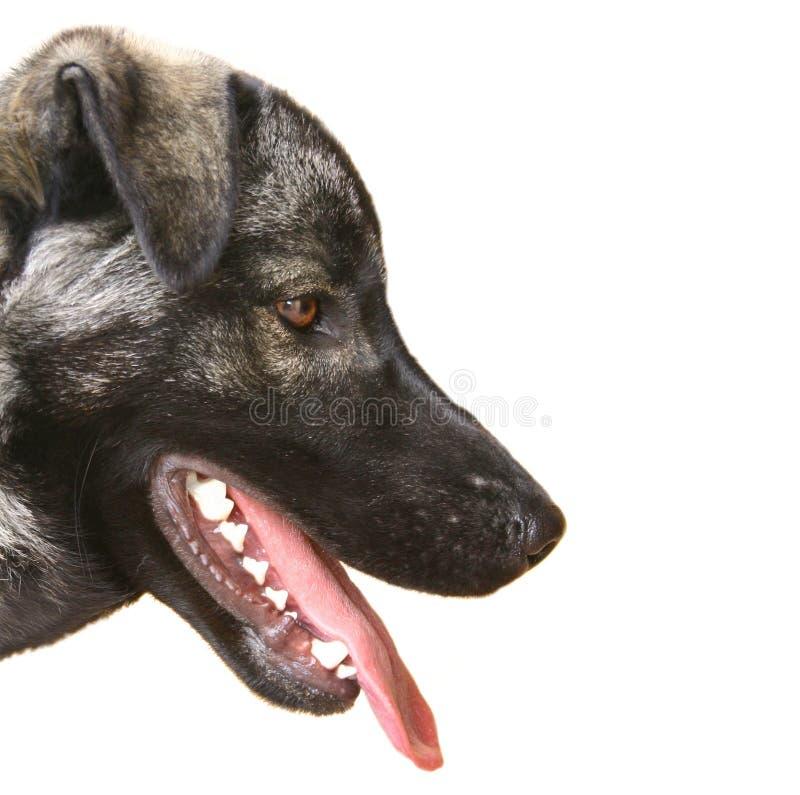 Cão veterinário fotos de stock royalty free