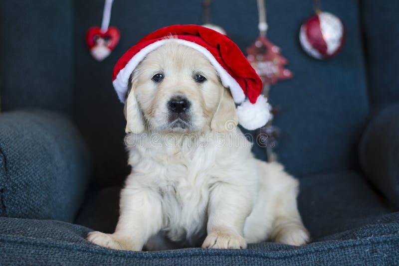 Cãozinho de Natal tendencioso com chapéu de Papai Noel fotos de stock royalty free
