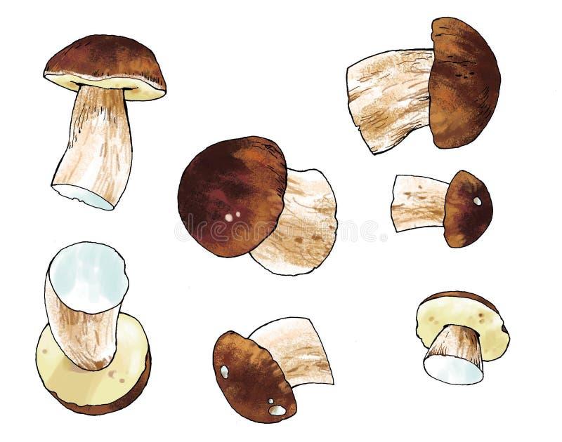 Cèpe comestible de chêne de dessin de champignon illustration stock