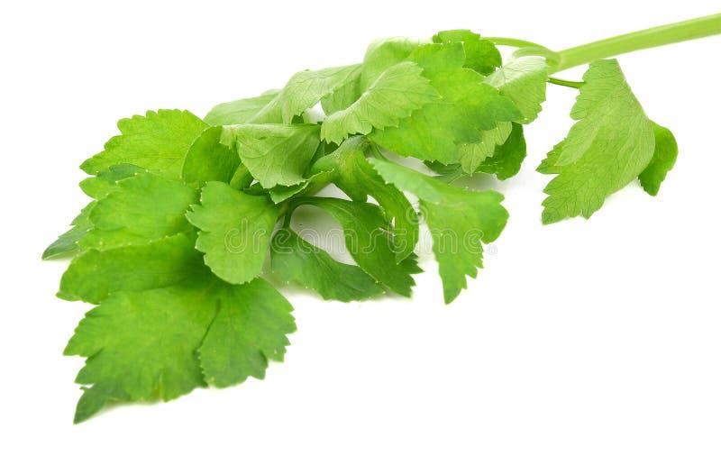 Céleri frais avec des feuilles d'isolement sur le fond blanc image libre de droits