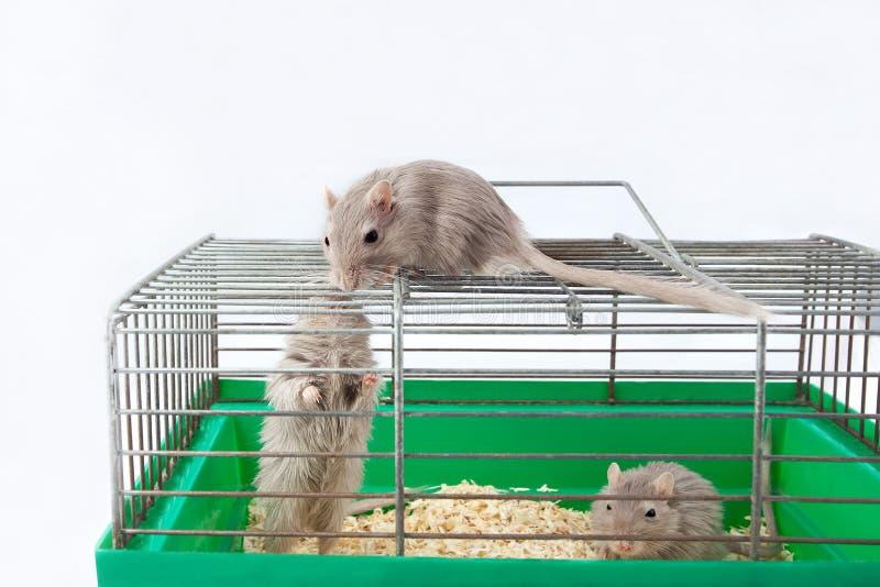 Eliminar ratones en casa trendy cmo eliminar ratas y ratones con remedios naturales caseros - Como eliminar ratones en el hogar ...