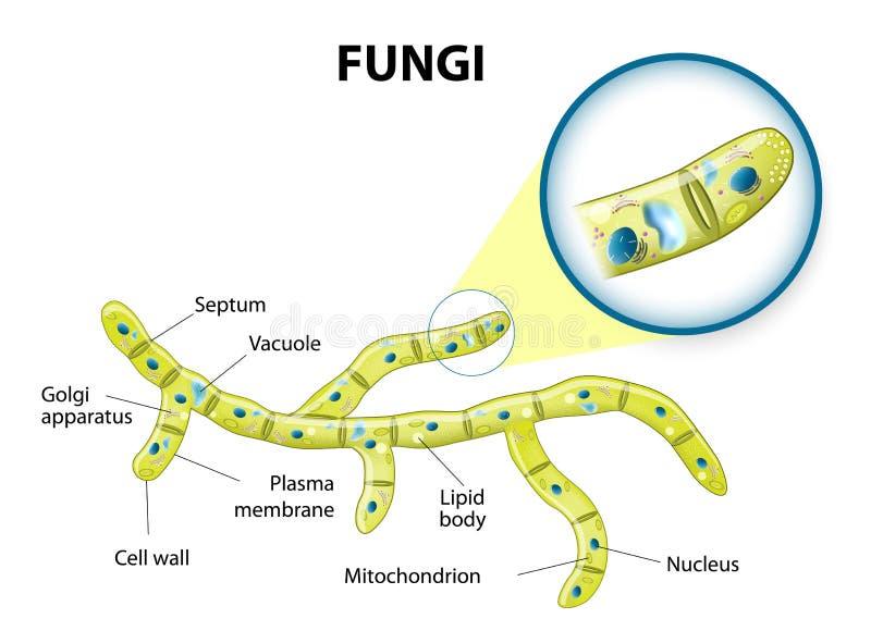 Célula de los hongos stock de ilustración